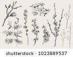 blooming gargen. spring flowers ... | Shutterstock .eps vector #1023889537