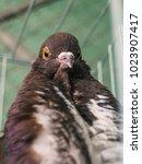 Portraits Of Pigeons