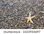 seashells and starfish on the... | Shutterstock . vector #1023933697
