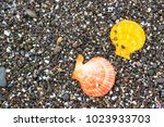 seashells and starfish on the... | Shutterstock . vector #1023933703