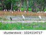 huge flock of great white...   Shutterstock . vector #1024114717