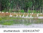 huge flock of great white...   Shutterstock . vector #1024114747