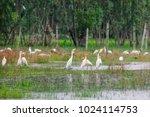 huge flock of great white...   Shutterstock . vector #1024114753