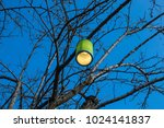 colorful lamps on the tree. | Shutterstock . vector #1024141837