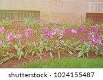 flowerbed of dark and light... | Shutterstock . vector #1024155487