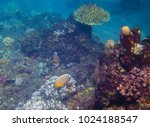 coral reef and tropical fish | Shutterstock . vector #1024188547