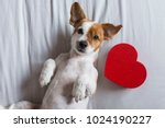 cute young small dog sitting on ...   Shutterstock . vector #1024190227