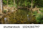 streams in the forest .   Shutterstock . vector #1024283797