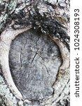 tree bark suitable for... | Shutterstock . vector #1024308193