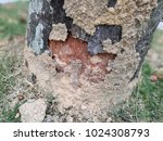 tree damaged by termite | Shutterstock . vector #1024308793