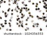 job's tears   coix lachryma... | Shutterstock . vector #1024356553