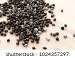 job's tears   coix lachryma... | Shutterstock . vector #1024357297