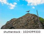 sea bird seagull sitting on a...   Shutterstock . vector #1024399333