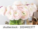 persian buttercup. bunch pale... | Shutterstock . vector #1024401577