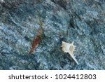 fossil shells on the rock  sea... | Shutterstock . vector #1024412803
