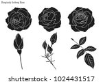 rose vector set by hand drawing.... | Shutterstock .eps vector #1024431517