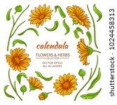 calendula elements  vector set  | Shutterstock .eps vector #1024458313