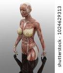3d Rendering Hd Woman Muscle...