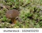 brown mushroom in hutan lipur... | Shutterstock . vector #1024653253
