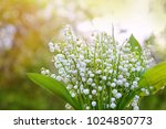 lilies of the valley on ... | Shutterstock . vector #1024850773