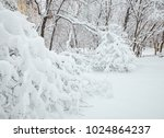 winter view on fallen trees on... | Shutterstock . vector #1024864237