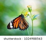 closeup of monarch butterfly | Shutterstock . vector #1024988563