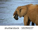 elephant drinking in river | Shutterstock . vector #10250227