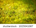 abstract natural background... | Shutterstock . vector #1025041087