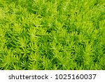 close up of green grass in the... | Shutterstock . vector #1025160037