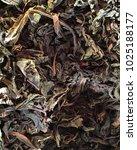 black tea leaves in the sun | Shutterstock . vector #1025188177