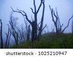 barren tree in mist. dzukou... | Shutterstock . vector #1025210947