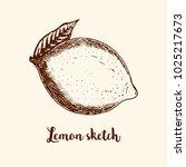 sketch of citrus fruit lemon... | Shutterstock .eps vector #1025217673