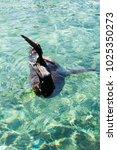 sea lion in water | Shutterstock . vector #1025350273