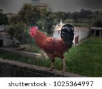 picture  of cock in a wall with ... | Shutterstock . vector #1025364997