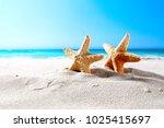 beautiful sea shells on the...   Shutterstock . vector #1025415697