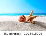 beautiful sea shells on the... | Shutterstock . vector #1025415703