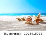 beautiful sea shells on the... | Shutterstock . vector #1025415733
