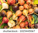 multicolored beets with roots... | Shutterstock . vector #1025445067