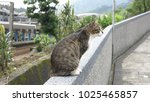 curious cat on the wall... | Shutterstock . vector #1025465857