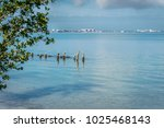 group of pelicans perched on...   Shutterstock . vector #1025468143