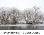 White Frozen Trees On The Edge...