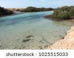 mangrove plant in ras mohamed...   Shutterstock . vector #1025515033