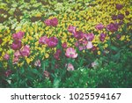 flowerbed with dark and bright... | Shutterstock . vector #1025594167
