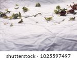macro green sage leaflets with... | Shutterstock . vector #1025597497