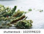 macro bunch of green sage with... | Shutterstock . vector #1025598223