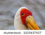 a large yellow billed stork ...   Shutterstock . vector #1025637427
