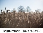lake with a reeds in the... | Shutterstock . vector #1025788543