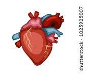 cartoon illustration of a heart.... | Shutterstock .eps vector #1025925007