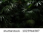 dark shadow of tropical leaves... | Shutterstock . vector #1025966587