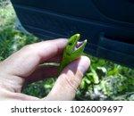 Small photo of An ordinary quick green lizard. Lizard on the cut of a tree stump. Sand lizard, lacertid lizard.